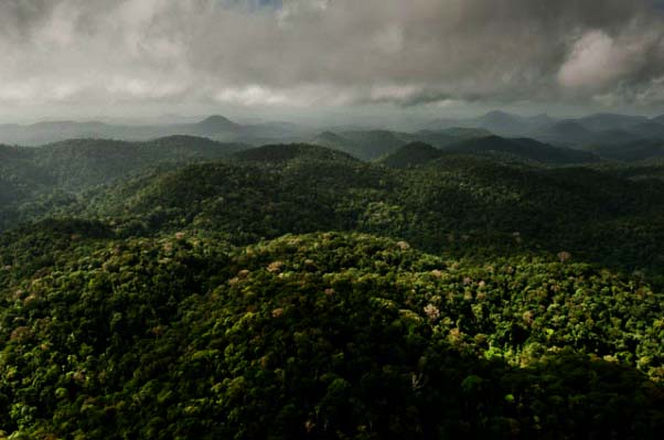 foret-guyane-region-saul-parc-amazonien-guyane-602x399